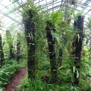 La serre de milieu aride et le Palmarium du Jardin des Plantes