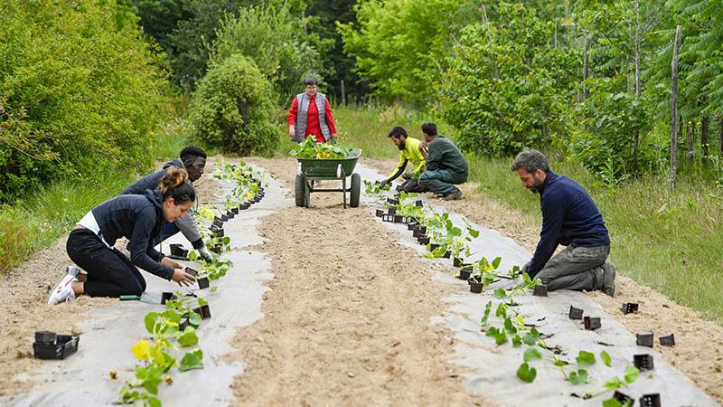 Une tonne de pommes de terre et des sillons entiers de courges ont été plantés à la pépinière municipale, avec l'aide des bénévoles de l'association EmpowerNantes.